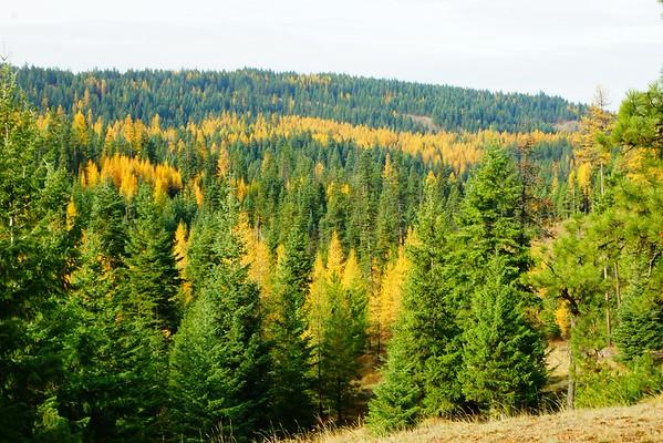 Blue Mountain Fall Color, 11-12