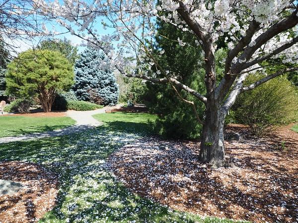 Yakima Arboretum, 3-15